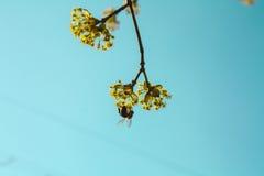 Colori luminosi della molla Fotografie Stock Libere da Diritti