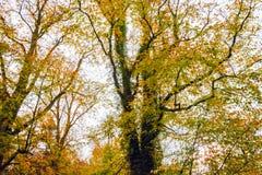 Colori luminosi di autunno sugli alberi nella foresta di Salcey Fotografie Stock