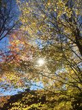 Colori luminosi di caduta a upstate New York fotografia stock libera da diritti