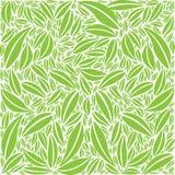 Colori verdi e bianchi del modello del fogliame - Fotografia Stock
