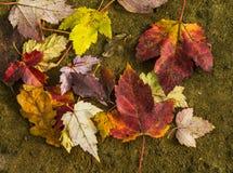 Colori vibranti delle foglie di autunno su suolo umido immagini stock