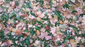 Coloridamente outono Foto de Stock Royalty Free