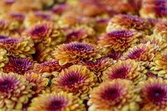 Colorido arregle de flores foto de archivo