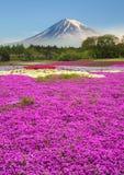 Colorido da montanha Fuji com campo de flor imagens de stock