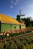 Colorido das tulipas floresça e moinho de vento com o céu azul bonito imagens de stock royalty free