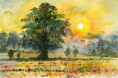 Colorido de campo del arroz en campo y de la emoción en puesta del sol Fotografía de archivo
