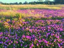 Colorido de estación de primavera Fotografía de archivo libre de regalías