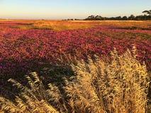 Colorido de estación de primavera Imagen de archivo libre de regalías