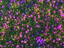 Colorido de estación de primavera Foto de archivo