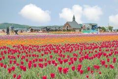 Colorido de jardín del tulipán en Kamiyubetsu Tulip Park, Hokkaido, Ja Fotografía de archivo libre de regalías