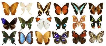 Colorido de la colección de las mariposas aislado en blanco Fotos de archivo