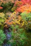 Colorido de la estación del otoño Fotografía de archivo libre de regalías