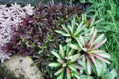 Colorido de la planta en el jardín Imagen de archivo libre de regalías