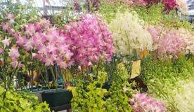 Colorido de las flores de la orquídea con la hoja verde Imágenes de archivo libres de regalías