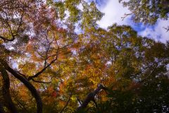 Colorido de las hojas de otoño Osaka Japón imagenes de archivo