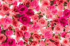 Colorido de las rosas aisladas en el fondo blanco Imágenes de archivo libres de regalías