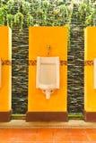 Colorido de orinales con la planta de la enredadera Foto de archivo libre de regalías