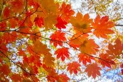 Colorido de otoño Foto de archivo libre de regalías