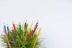 Colorido e planta Foto de Stock Royalty Free