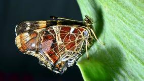 Colorido hermoso de la mariposa Fotos de archivo libres de regalías