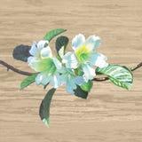 Colorido realista de pintura de la flor de trompeta del precursor en el tablón de madera Imagen de archivo