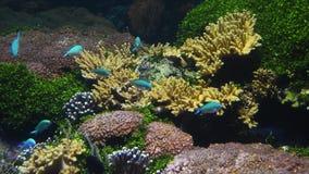 Colorido veja peixes no fim do aquário acima filme
