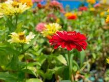 Colorido y flor fotografía de archivo libre de regalías