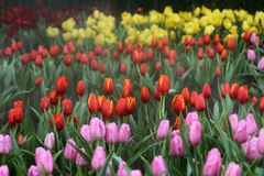 Colorido y vernal Foto de archivo libre de regalías