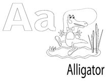 Coloring Alphabet for Kids,A. Alligator Stock Images