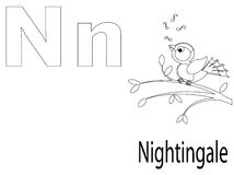 Coloring Alphabet for Kids,N. Coloring Alphabet for Kids N,nightingale Royalty Free Stock Photos