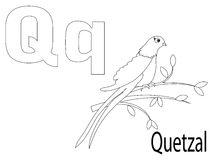 Coloring Alphabet for Kids,Q. Quetzal Royalty Free Stock Images