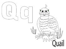 Coloring Alphabet for Kids,Q. Quail Royalty Free Stock Images
