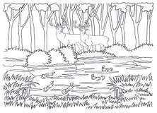 Coloring. Animals living in the forest. Animals and birds. Deer, ducks stock illustration