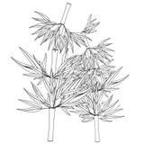Coloring Bamboo tree tropical china japan. Vector illustration vector illustration