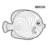 Coloring book, Angelfish. Coloring book for children, Angelfish stock illustration
