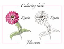 Coloring book with beautiful zinnia flower Royalty Free Stock Photo