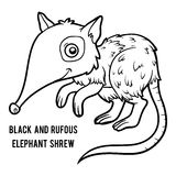 Coloring book, Black and rufous elephant shrew Royalty Free Stock Photo