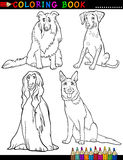 Cartoon purebred Dogs Coloring Page Royalty Free Stock Image