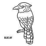 Coloring book, Blue jay Stock Photography