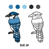 Coloring book, Blue jay Royalty Free Stock Images