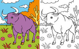Coloring book bull. Colors and black and white version of a placid bull eating grass, for a coloring book Stock Photos