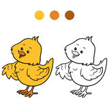 Coloring book (chick) Stock Photos