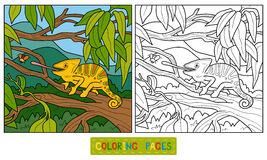 Coloring book for children (chameleon) Stock Photos