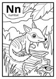 Coloring book, colorless alphabet. Letter N, numbat. Coloring book for children, colorless alphabet. Letter N, numbat Stock Illustration