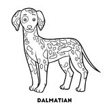 Coloring book, Dog breeds: Dalmatian Stock Image