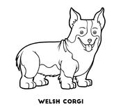 Coloring book, Dog breeds: Welsh corgi Stock Images