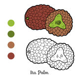Coloring book for children: fruits and vegetables (Ita Palm) Stock Image