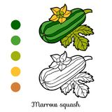Coloring book, Marrow squash. Coloring book for children, Marrow squash Royalty Free Stock Photo