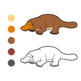 Coloring book for children: platypus animals Stock Images