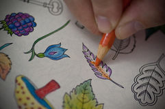 Coloring book. Closeup image of adult person drawing on coloring book with color pencil Royalty Free Stock Photos